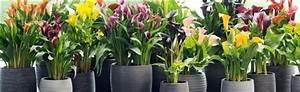 Plante Fleurie Intérieur : plantes fleuries int rieur l 39 atelier des fleurs ~ Premium-room.com Idées de Décoration