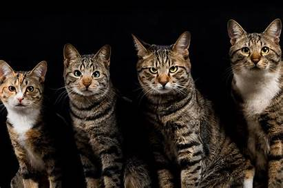Cat Funny Cats Wallpapers Animals Kitten Lovely