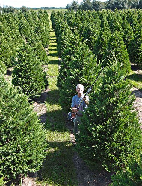 28 best christmas tree farms alabama christmas tree