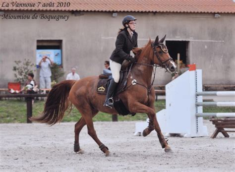 ensemble cheval crinieres de luxe mode  cheval le