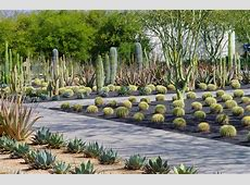 Plants That Live In The Desert Landscaping Ideas Arizona