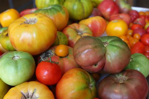 heirloom tomatoes raw and saucy tomato and melon salad tomato sauce earth eats indiana public media