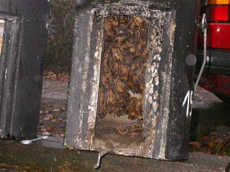 schwegler colony hibernation bat box 1fw arbor vitae