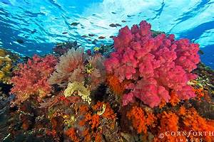 Beautiful Coral Reefs | www.pixshark.com - Images ...