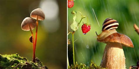 ordinary mushrooms   magical world  vyacheslav mishchenko