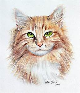 Calico Cat Drawing by Lena Auxier