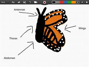 Diagram Of A Monarch Butterfly