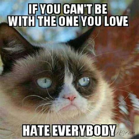 Grumpy Cat Meme Valentines Day - 25 best ideas about grumpy cat valentines on pinterest grumpy cat frozen grumpy cat humor
