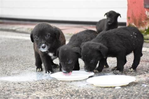 Çukura düşen köpekleri itfaiye kurtardı - Güncel Haberler ...