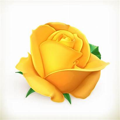 Rose Yellow Vector Flower Illustration Svg Clip