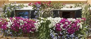 Plantes Et Fleurs Pour Balcon : quelles plantes choisir pour cacher son balcon de la vue ~ Premium-room.com Idées de Décoration