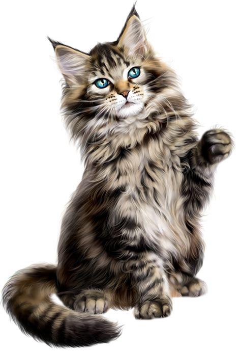 library  himalayan persian cat clip art royalty