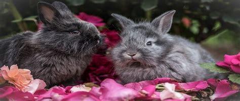 5 สายพันธุ์กระต่ายที่คนไทยนิยมเลี้ยง