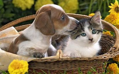 Puppy Kitten Together Animals Puppies Wallpapers Kittens