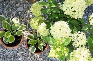 Pflanzen Für Raucher : die sch nsten pflanzkombinationen f r ein schattenbeet ~ Markanthonyermac.com Haus und Dekorationen
