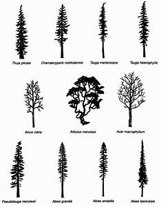 Tree Species Silhouettes Used In Schematic Slope Diagrams