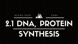 Dna Replication And Protein Synthesis  Guide