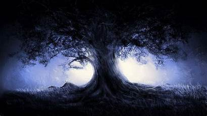 Dark Forest Wallpapers Tree