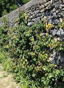 Taille De L Abricotier : abricotier planter et tailler ooreka ~ Dode.kayakingforconservation.com Idées de Décoration