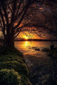 Beautiful Old Trees Lake