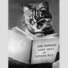 1577 Best Reading & Writing Pets Images In 2019  Funny Animals, Funny Cats, Funny Kitties