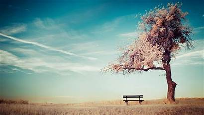 Alone Sky Ground Bench Trees Wallpapers Desktop