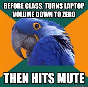 Paranoid Parrot Meme - the funniest paranoid parrot memes