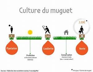 Quand Planter Le Muguet : comment fait on pour que le muguet soit fleuri le 1er mai ~ Melissatoandfro.com Idées de Décoration