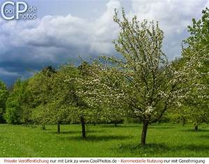 Bäume Verschneiden Obstbäume : fotos blumen b ume ~ Lizthompson.info Haus und Dekorationen