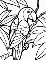 Coloring Parrot Rainforest Pages Printable Bird Printables sketch template