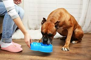 6 easy pet care tips to help you care for your pet With caring for your dog