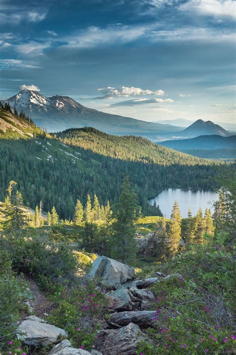 forest mount shasta california heart lake cinder cone