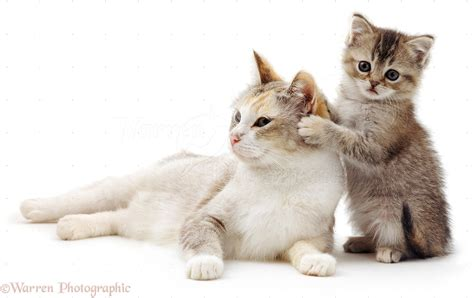 Cute Cats And Kittens Cat Kitten Images  Litle Pups