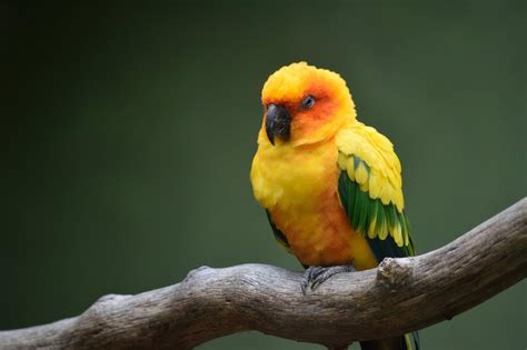 Download a beautiful android wallpaper for your android phone. Best 34+ Conure Wallpaper on HipWallpaper | Sun Conure Wallpaper, Conure Wallpaper and Conure ...