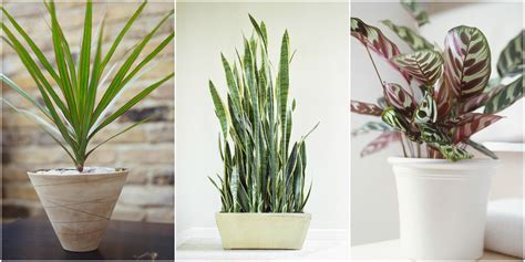 best small indoor plants low light low light houseplants plants that don 39 t require much light