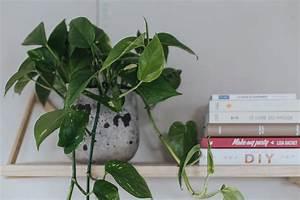 Plante D Intérieur : les plantes retombantes d 39 int rieur les vari t s et l ~ Dode.kayakingforconservation.com Idées de Décoration