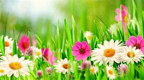 Flores Da Primavera Wallpaper Hd