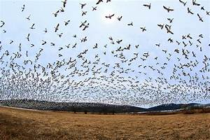 How Do Tired Birds Choose Where to Stop During Migration ...
