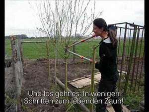 Weidenzaun Selber Bauen : weidenzaun weidenkunst energieweiden youtube ~ Watch28wear.com Haus und Dekorationen
