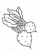 Coloring Vegetables Beet Pages Beets Template Fruits Sheet Vegetable Colouring Fruit Printable Templates Recommended Carrot Tomato Mycoloring sketch template