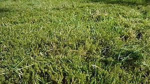 Wann Wächst Rasen : rasen vertikutieren ratgeber rasen richtig vertikutieren ~ Markanthonyermac.com Haus und Dekorationen