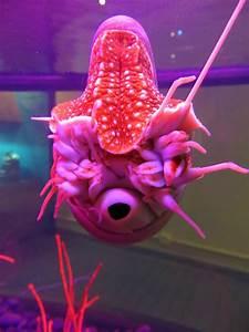 Rare Exotic Sea Animals