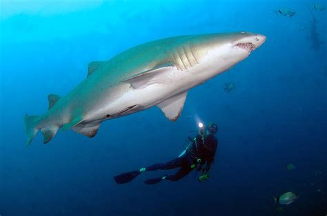 dive  sharks  shipwrecks