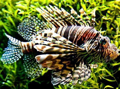 worlds  dangerous fish britannicacom