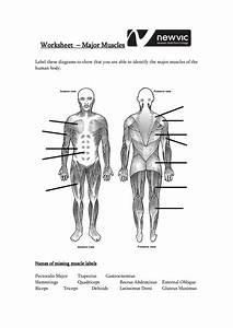 Muscle Diagram Blank   Muscle Diagram Blank 36 Blank