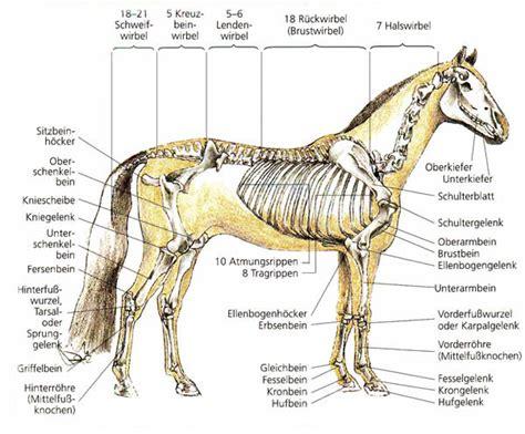 anatomie pferd skelett hufe zaehne verdauung sinne