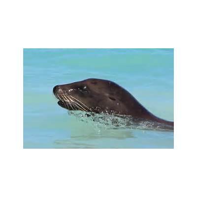File:Galapagos Sea Lion Portrait.jpg