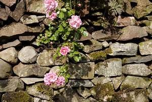 Pflanzen Für Trockenmauer : wie baue ich eine trockenmauer tipps zum geeigneten fugenverlauf ~ Orissabook.com Haus und Dekorationen