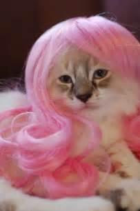 pink cat thats sooooooooooo cuteeeeee cats