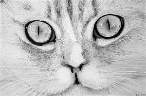 Cat, Face, Drawing, By, Kenny, Chaffin
